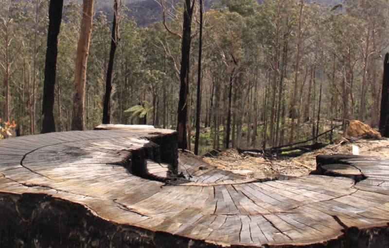 Logging in Victoria's central highlands.